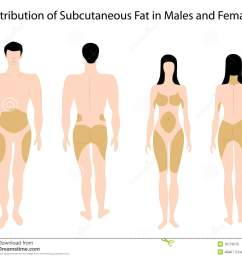 subcutaneous fat in human stock vector illustration of healthcare diagram of fat in body [ 1300 x 1160 Pixel ]