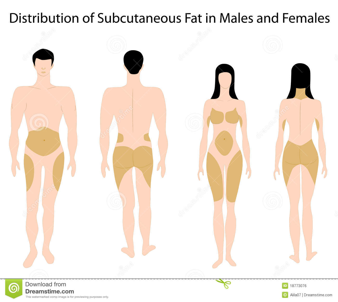 hight resolution of subcutaneous fat in human stock vector illustration of healthcare diagram of fat in body