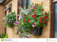 Summer Bedding Flowers In A Wall Mounted Basket. Stock ...