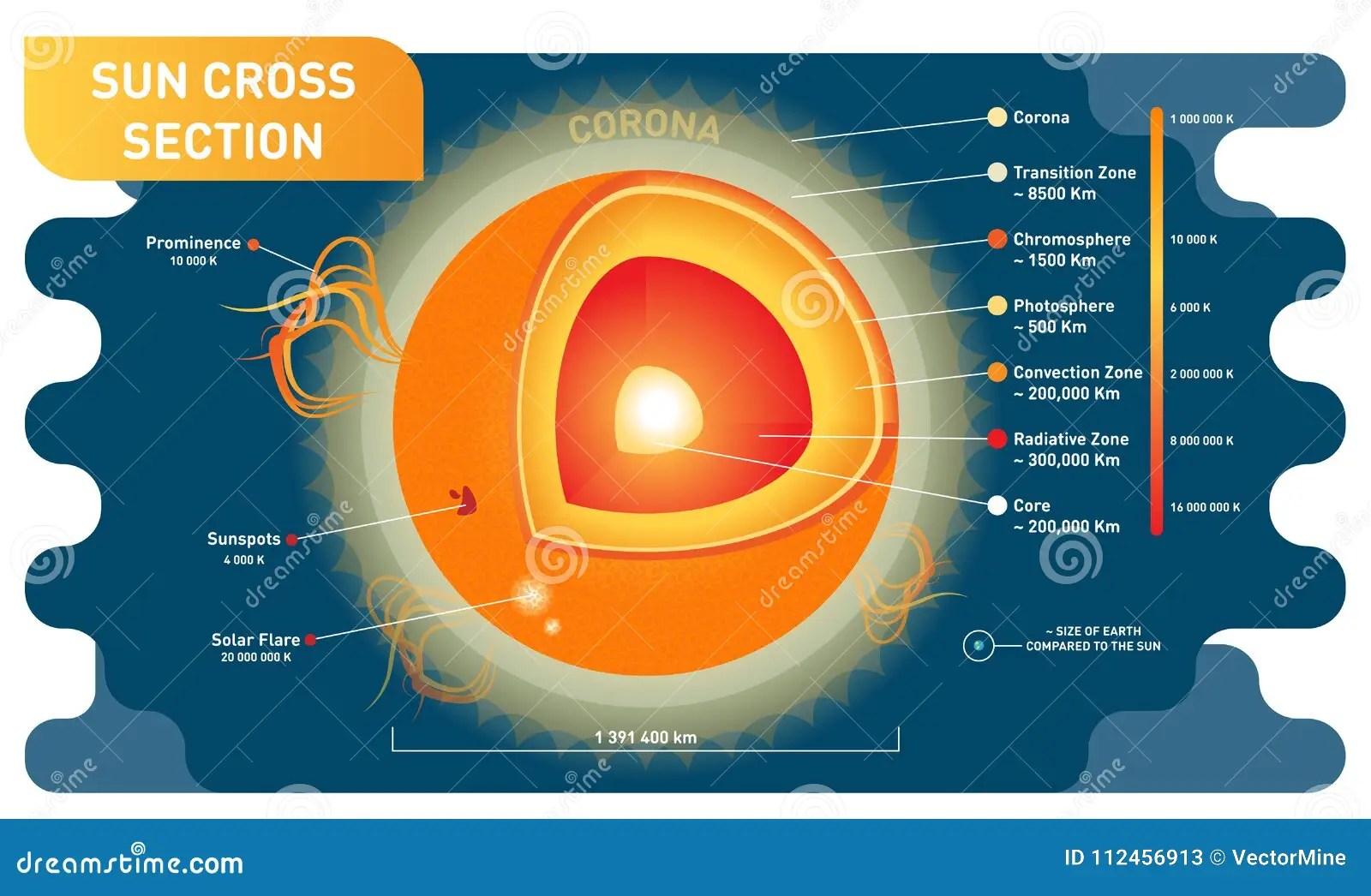 hight resolution of sun cross section scientific vector illustration diagram with sun sun cross section scientific vector illustration diagram