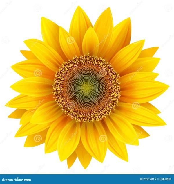 sunflower stock vector. illustration