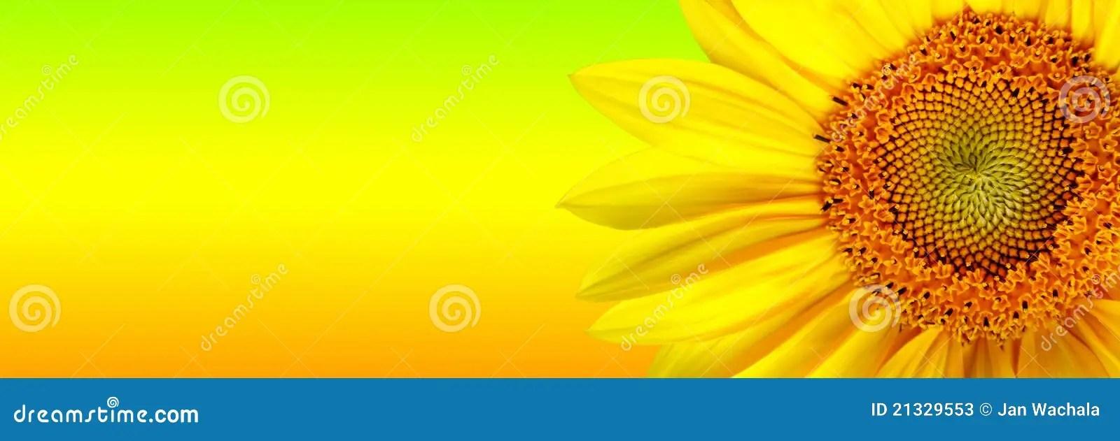 Fall Sunflowers Wallpaper Sunflower Banner Stock Photos Image 21329553