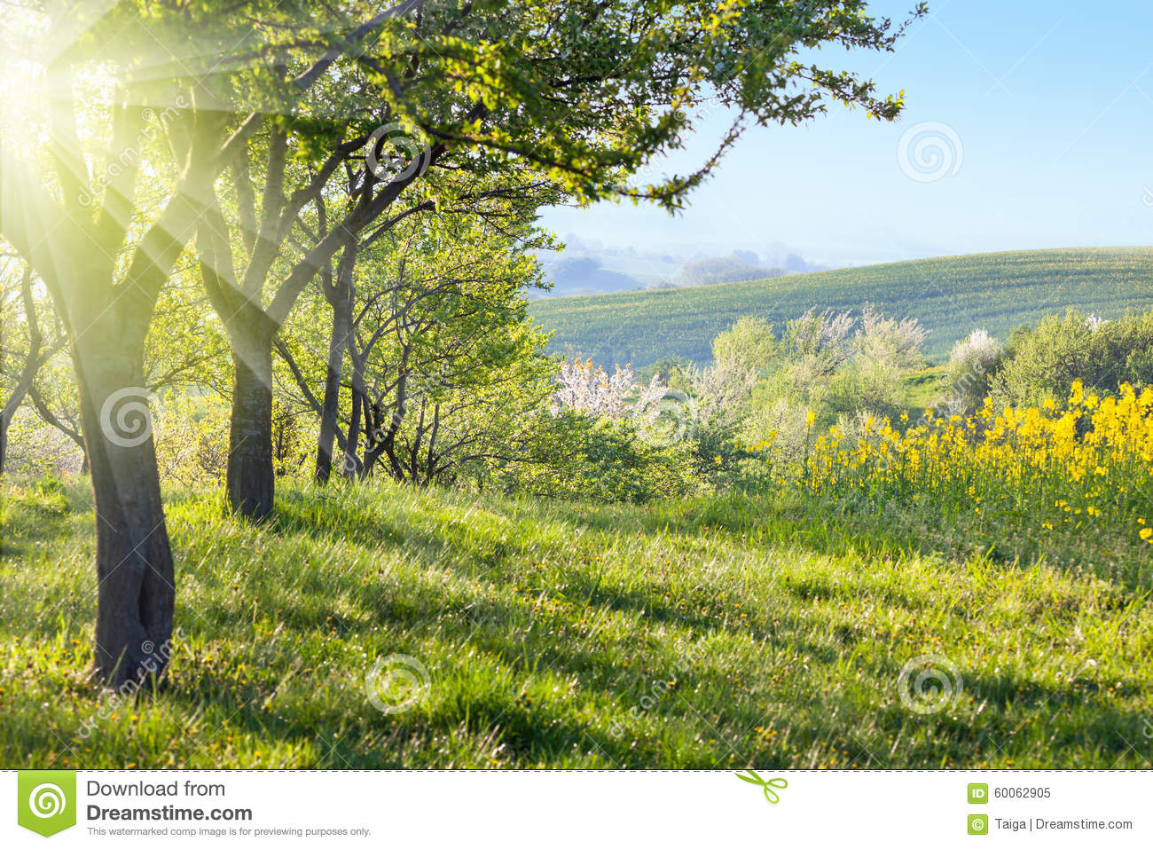 Sunny Countryside Landscape At The Morning Stock Photo  Image 60062905