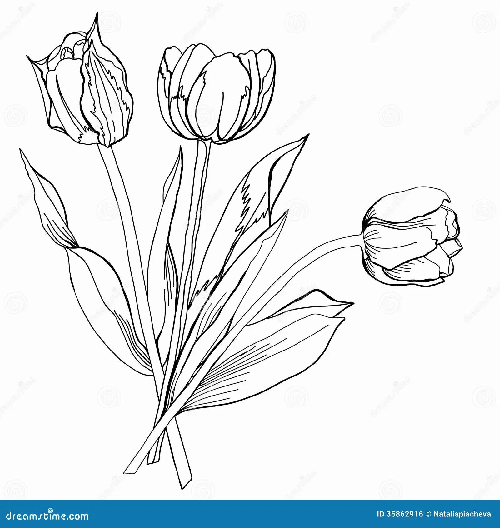 Svartvit Tulipetch Stock Illustrationer Illustration
