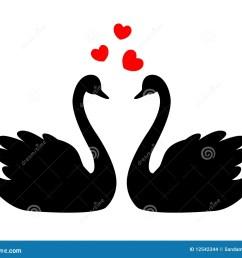 swans in love [ 1300 x 1101 Pixel ]