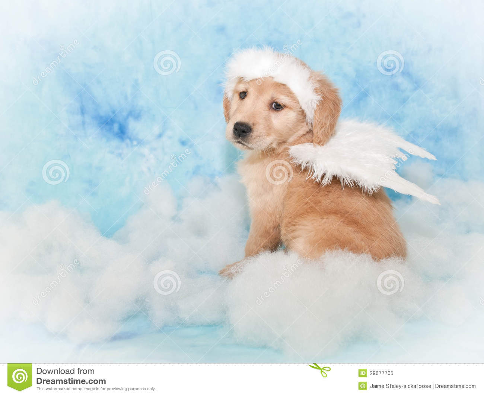 Sweet Angel Puppy Royalty Free Stock Photo Image 29677705