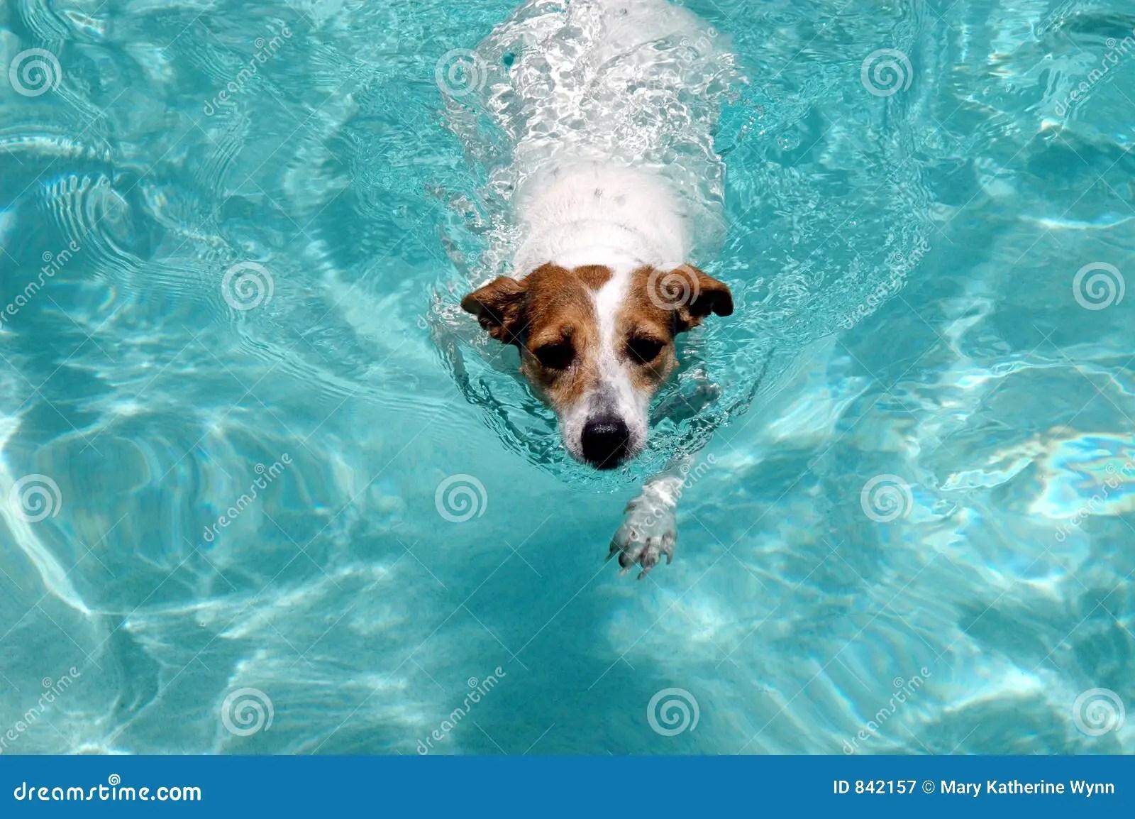 Swimming Dog Royalty Free Stock Photography  Image 842157