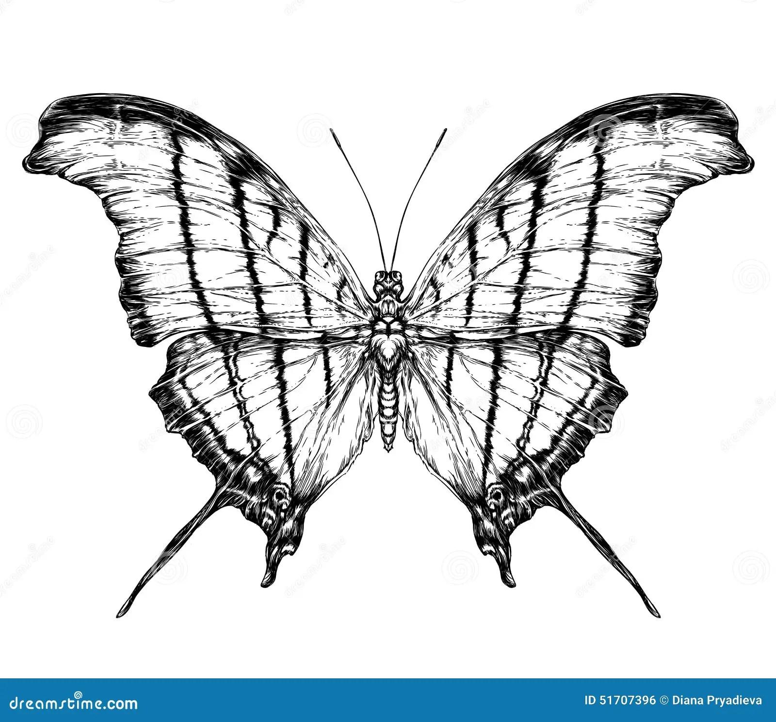 Szczego Owy Realistyczny Nakre Lenie Motyl Ilustracja