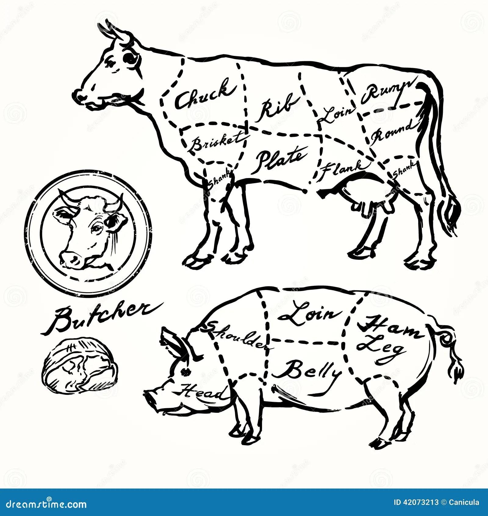 Tagli Del Manzo E Della Carne Di Maiale Illustrazione