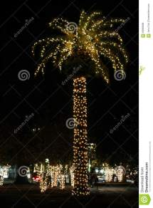 Tall Palm Tree With Christmas Lights In Charleston South