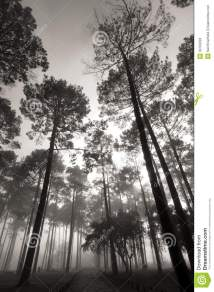 Tall Tree Forest Stock - 30156293