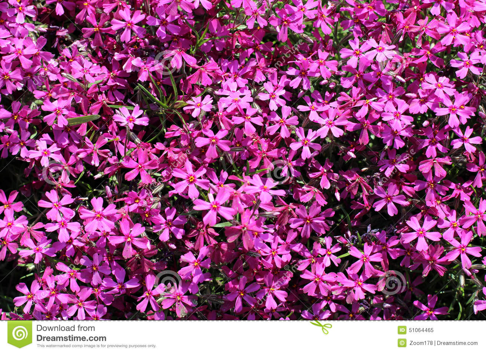 tapis des fleurs pourpre image stock image du pourpre 51064465