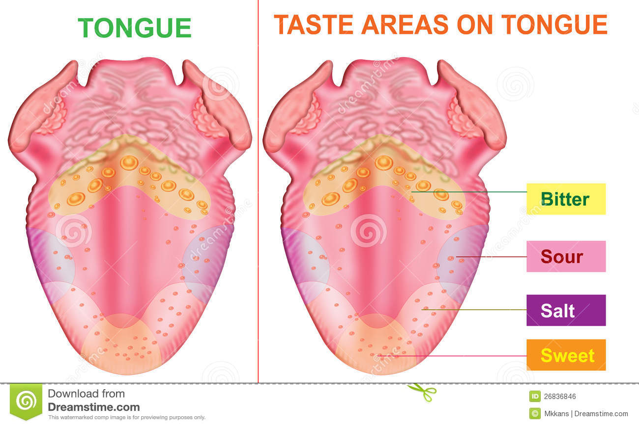 hight resolution of taste areas of tongue