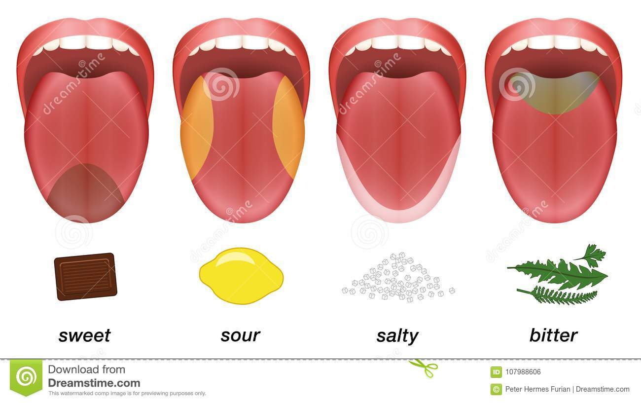 hight resolution of taste areas of the human tongue sweet sour salty and bitter represented by chocolate lemon salt and herbs