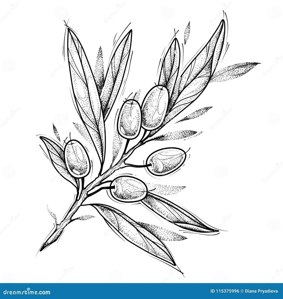 оливковая ветка проверите изображение конструкции мой Tattoo