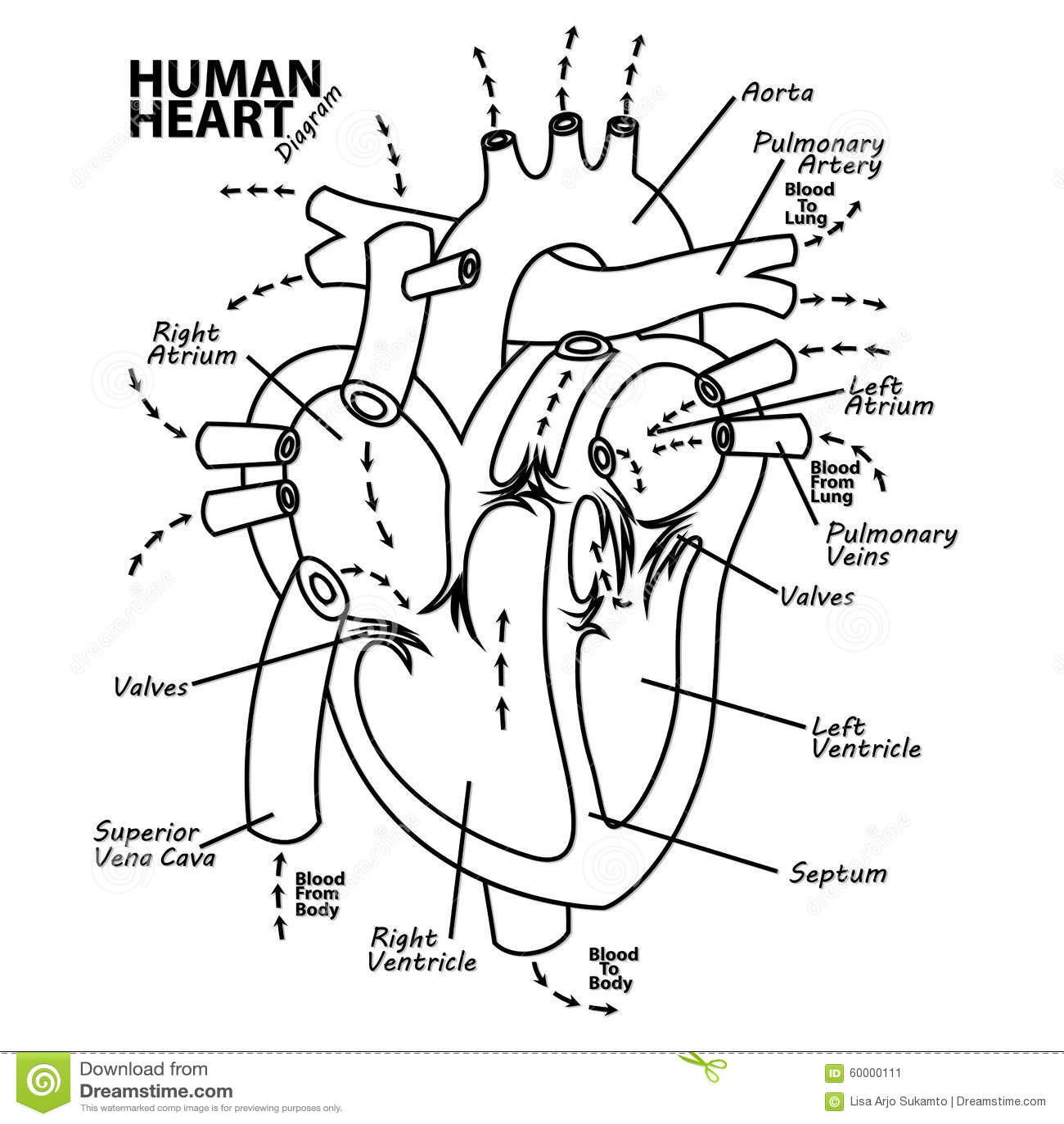Tatuaggio Umano Di Anatomia Del Diagramma Del Cuore