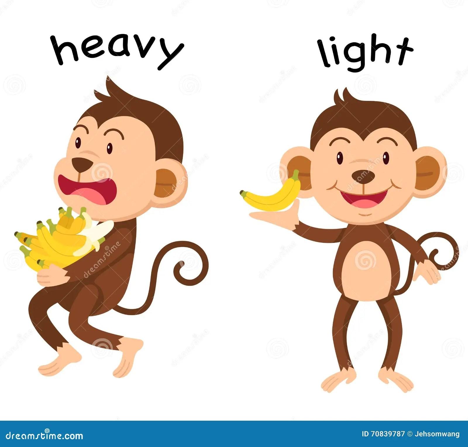 Tegenovergestelde Woorden Zware En Lichte Vector Vector