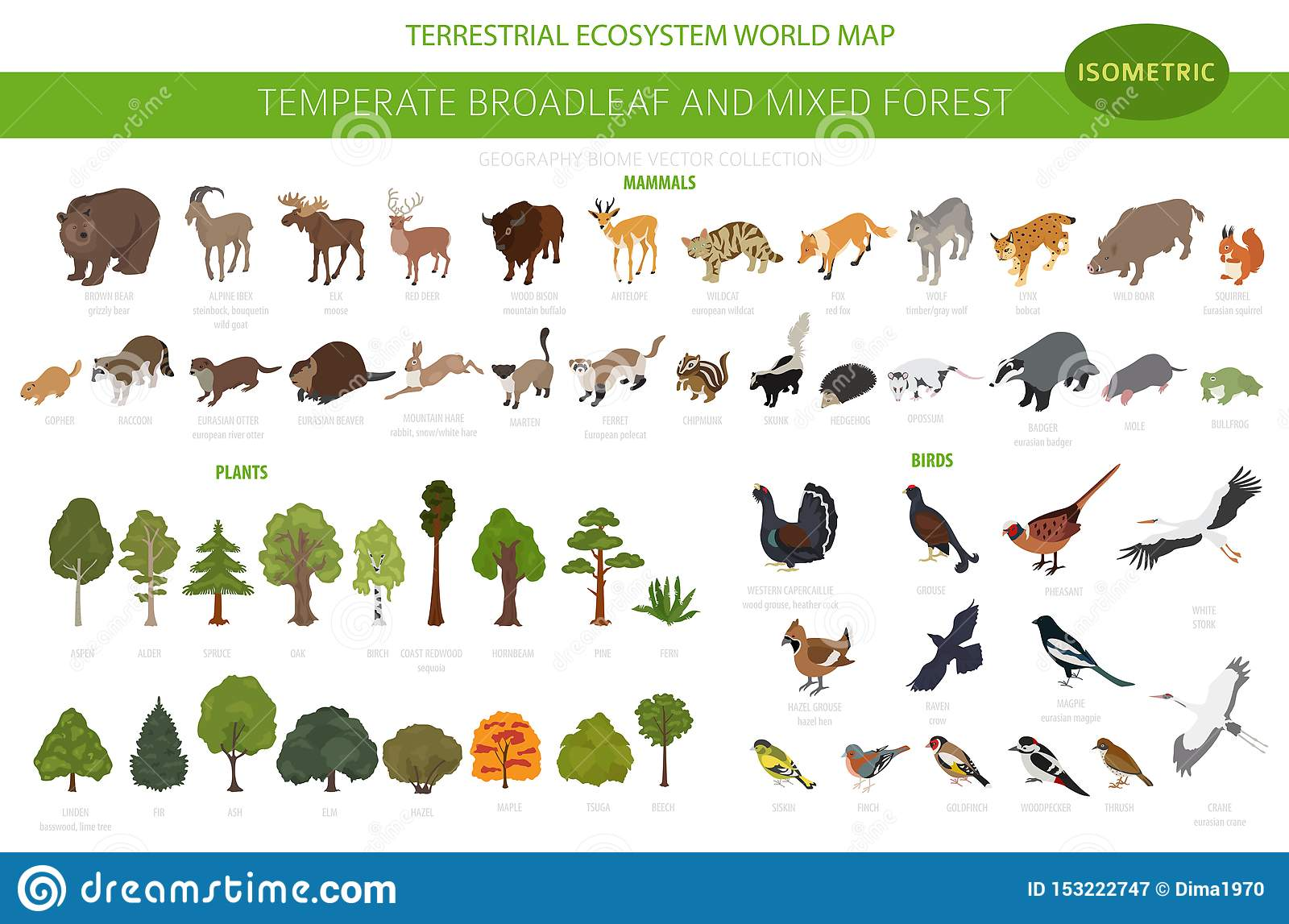 Canadian journal of forest research. Temperate Broadleaf Forest And Mixed Forest Biome Terrestrial Ecosystem World Map Animals Birds And Plants Set 3d Isometric Stock Vector Illustration Of Climate Goldfinch 153222747