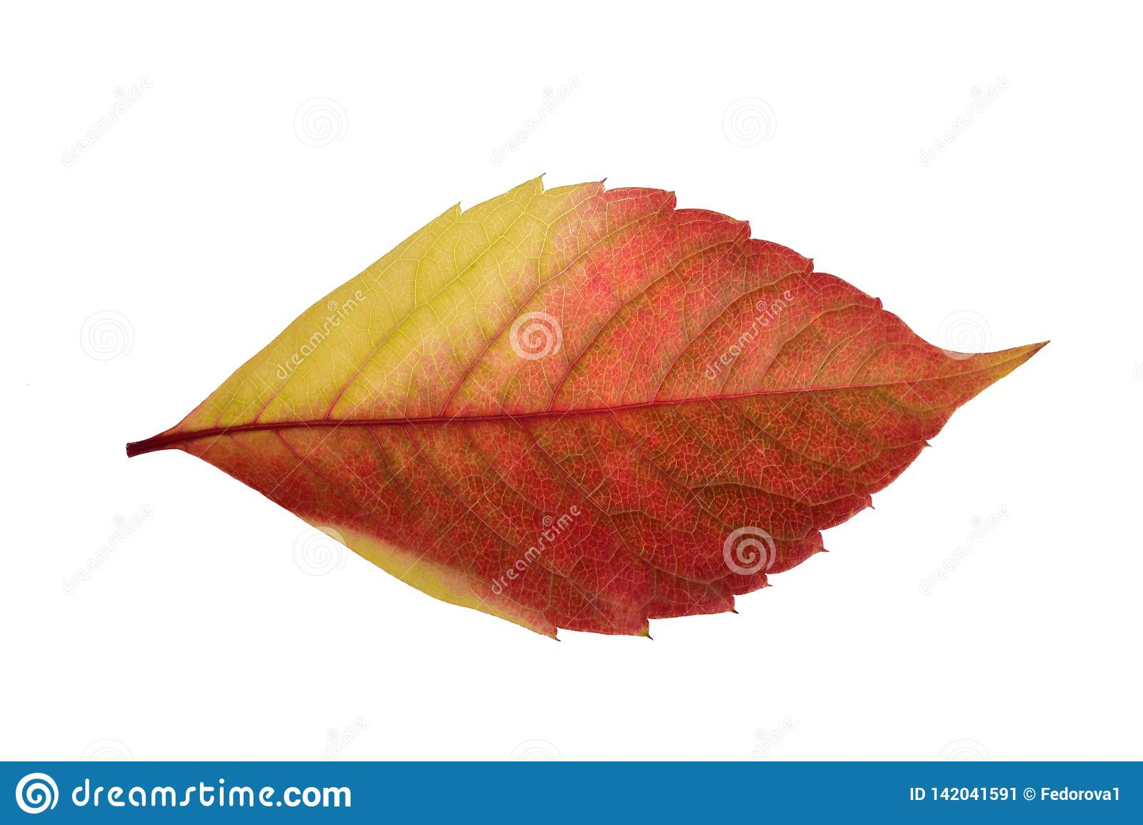 Texture Of A Bright Autumn Red Yellow Leaf From A Tree