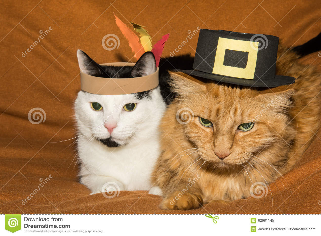 Fall Scarecrow Wallpaper Thanksgiving Cats Stock Photo Image 62981145