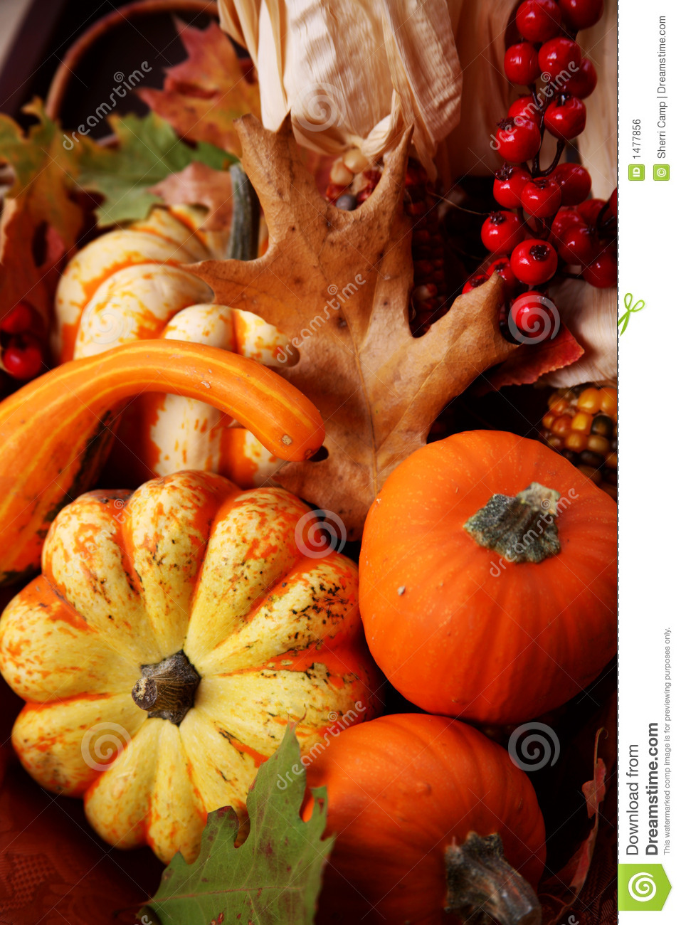 Fall Pumpkin Wallpaper Thanksgiving Fall Harvest Stock Photo Image Of Colorful