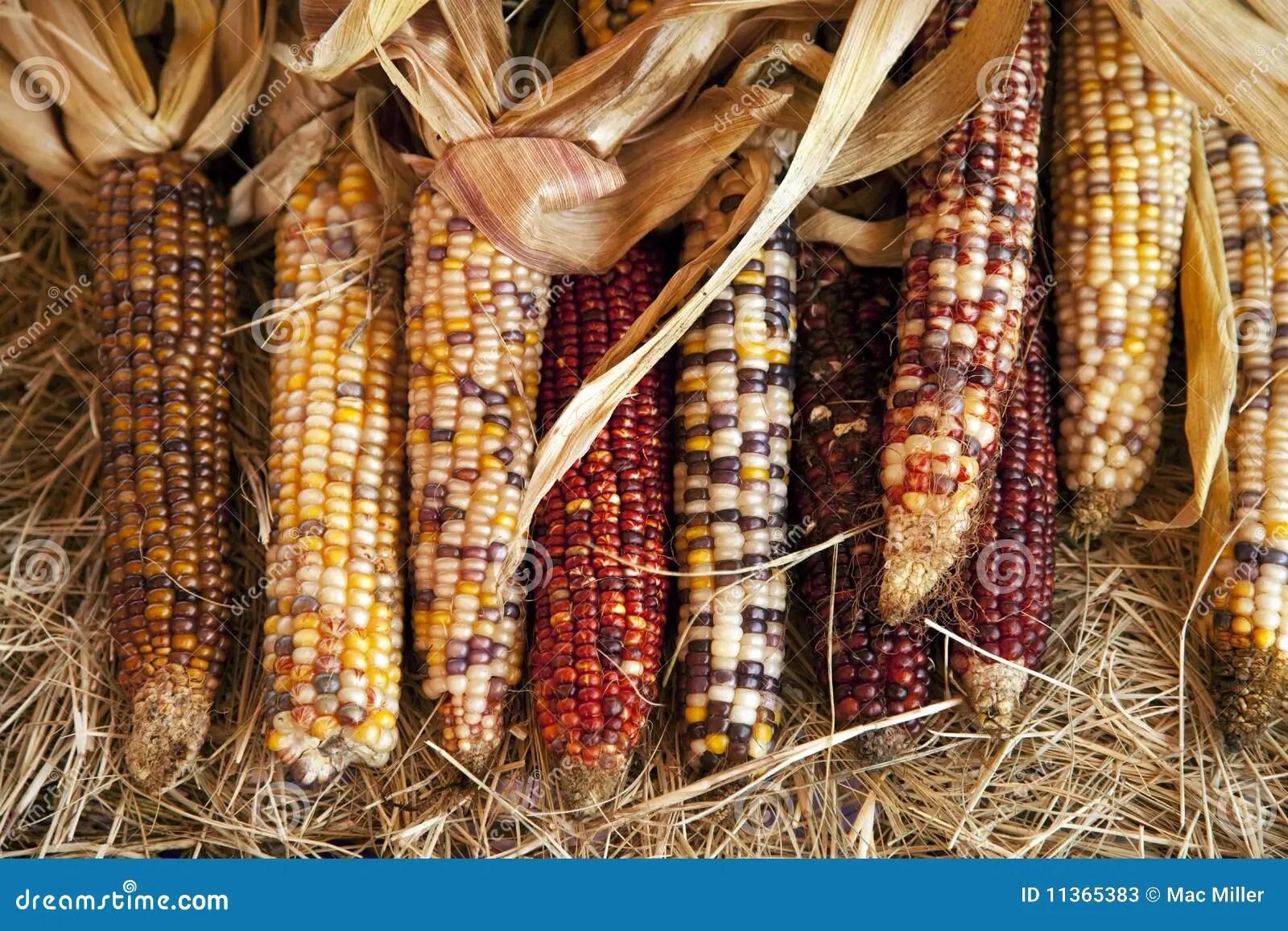 Thanksgiving Halloween Ears Of Corn Stock Image