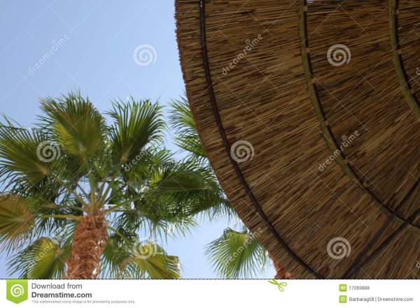 Thatched Umbrella And Palm Tree. Royalty Free Stock