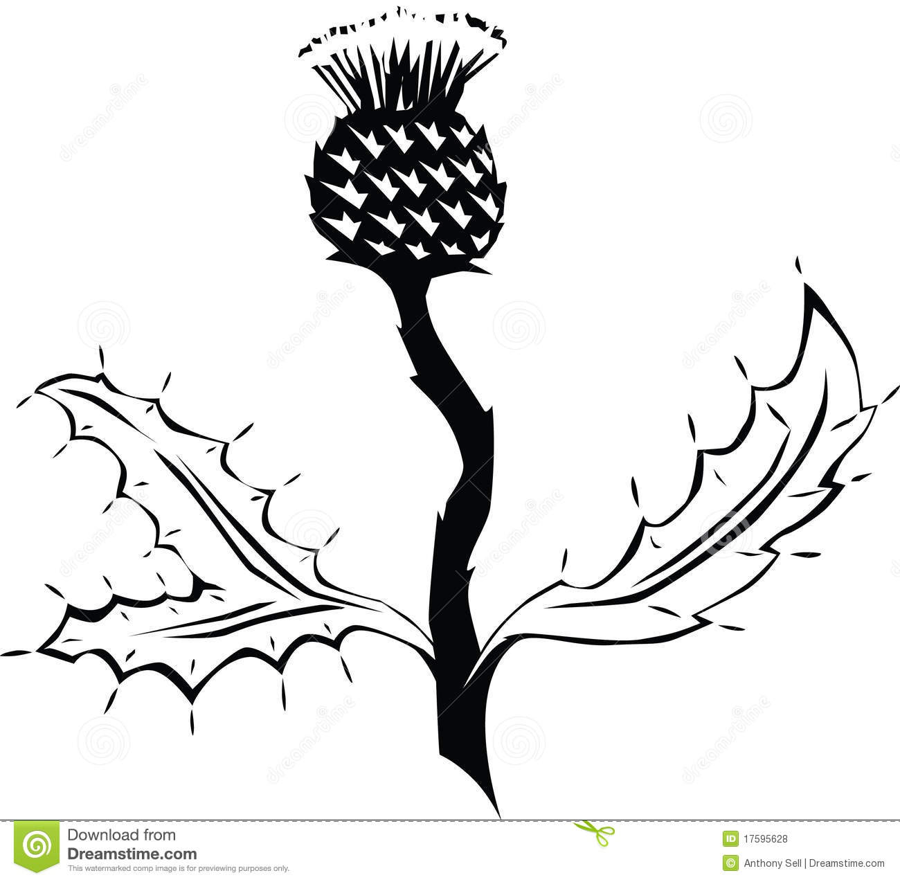 Thistle Cartoons Illustrations Amp Vector Stock Images