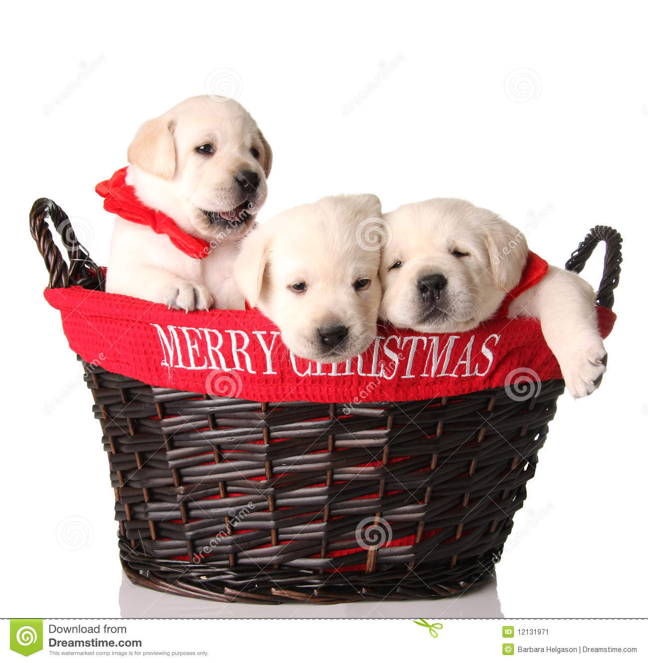 Three Christmas Puppies Stock Image Image Of Tired
