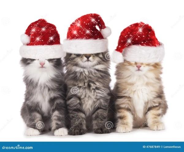 Cute Cat with Santa Hat
