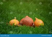 Three Halloween Pumpkins On Green Grass Royalty Free Stock ...