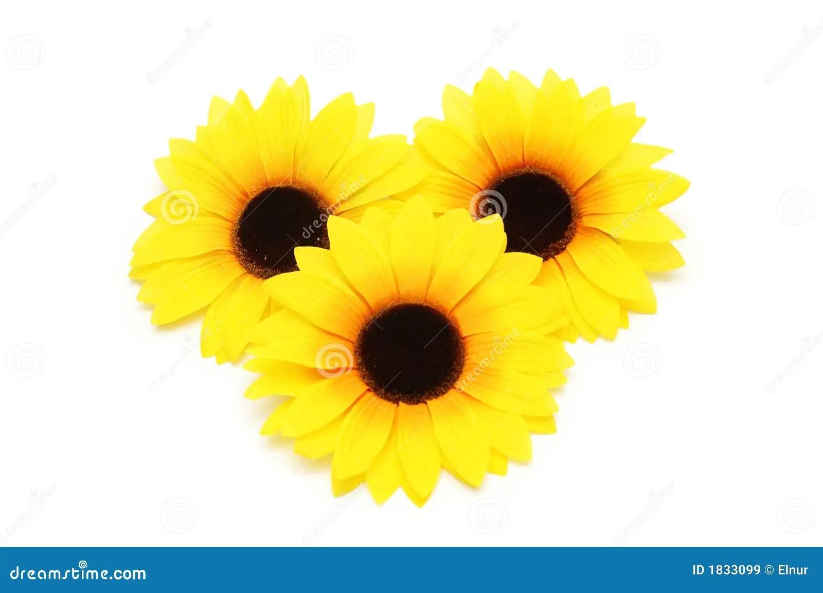 Black Daisy Wallpaper Three Sunflowers Isolated Stock Image Image Of Love Life