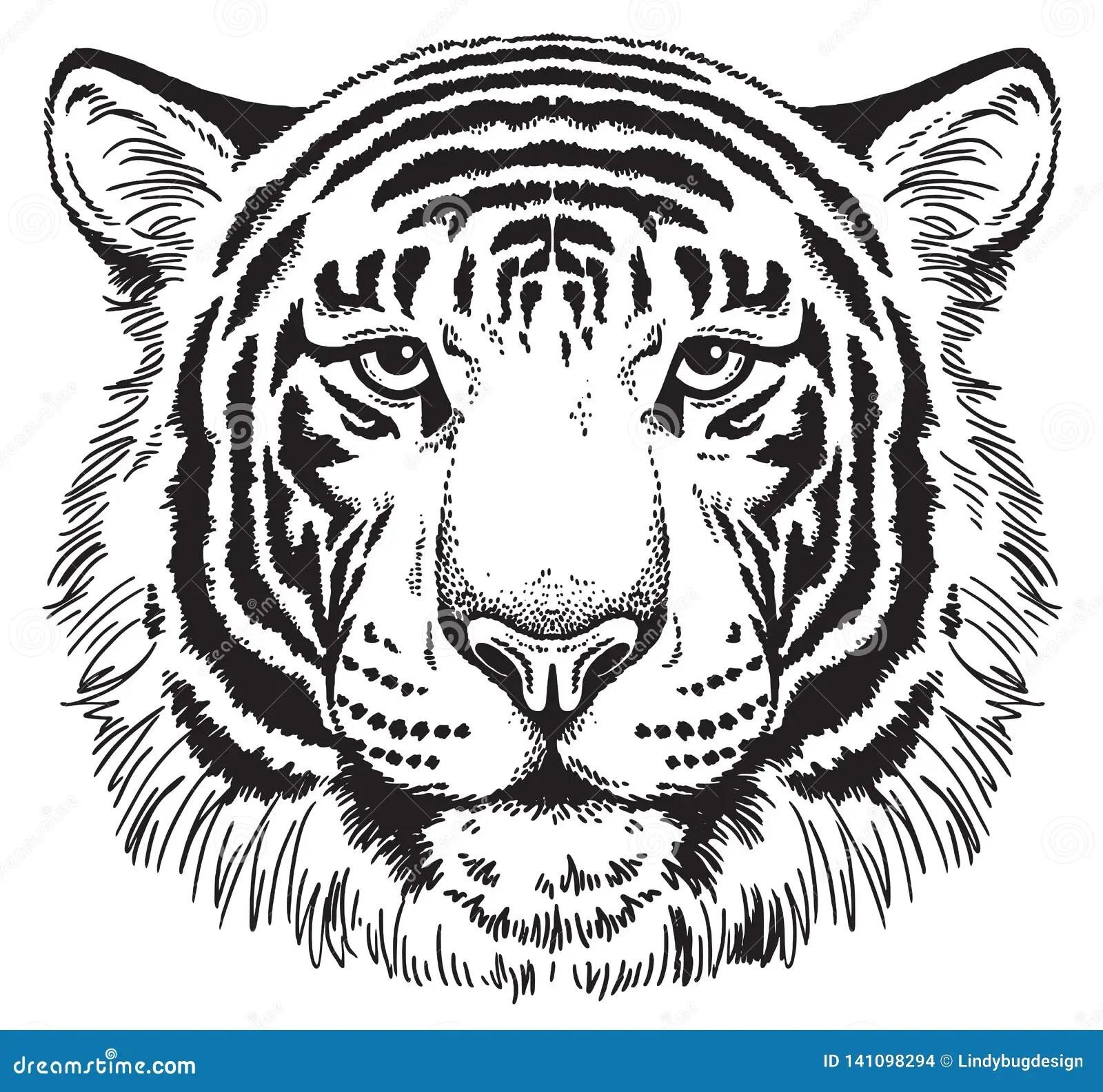 sketch of a tiger