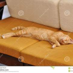 Cat Tunnel Sofa Price Sofas 4 Less Concord Ca Tiger Sleep Stock Image Of Couch Fluffy