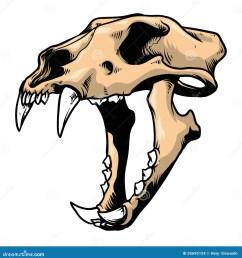 tiger skull diagram [ 1355 x 1300 Pixel ]