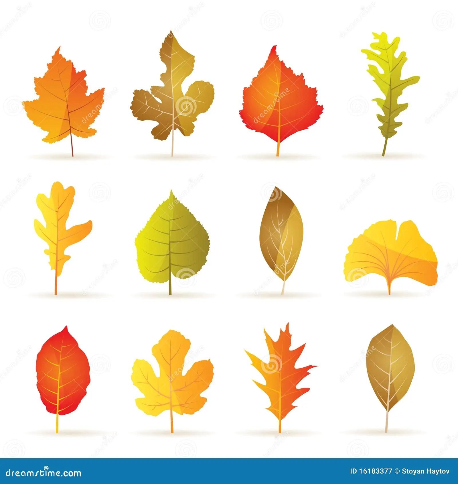 Tipos Diferentes De Icones Da Folha Do Outono Da Arvore