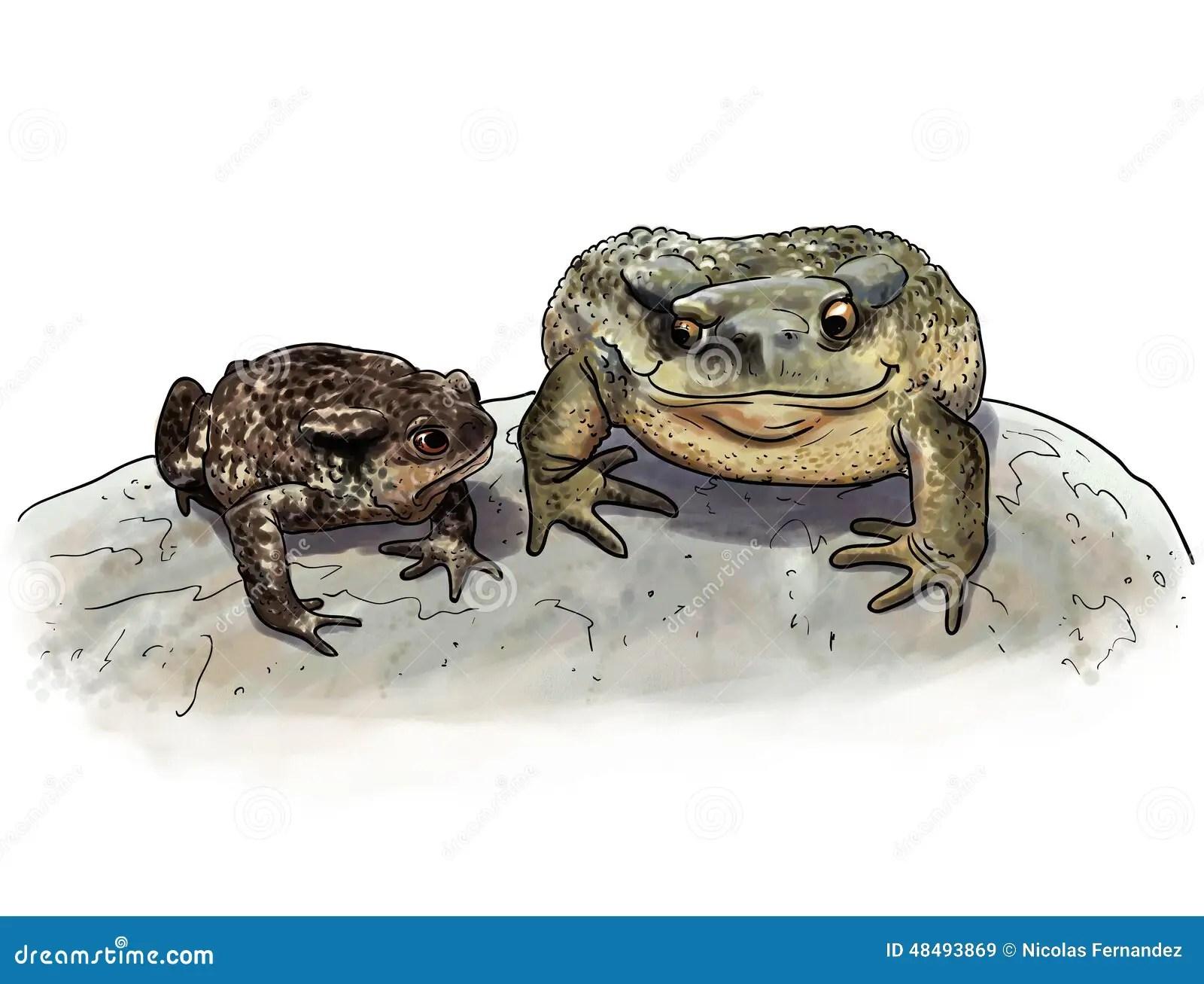 Toad Couple Comparison Stock Illustration Illustration Of