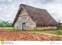 Tobacco Curing Barns