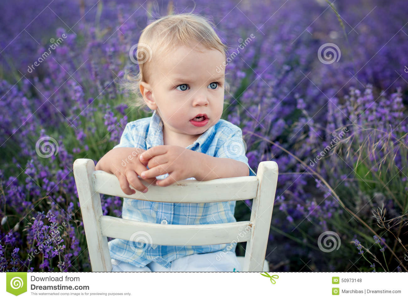 Toddler Boy Chair Toddler Baby Boy In A Lavender Field Stock Photo Image