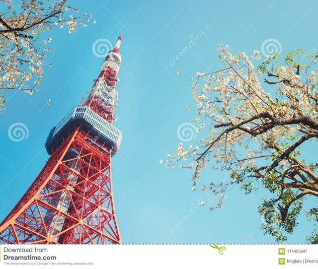 Tokyo Tower With Cherry Blossom Trees