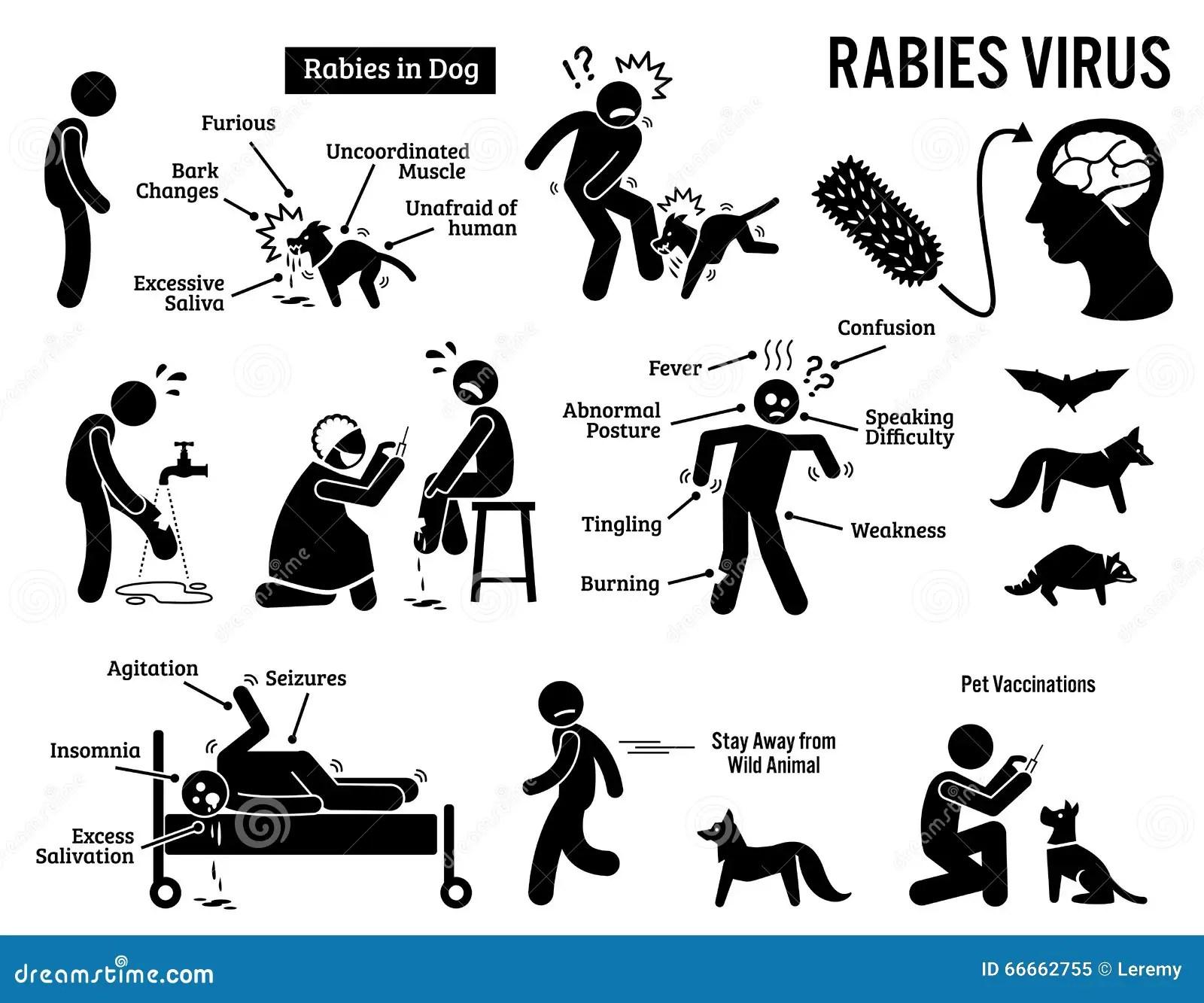 Tollwut Virus In Menschlichem Und Tier Clipart Vektor