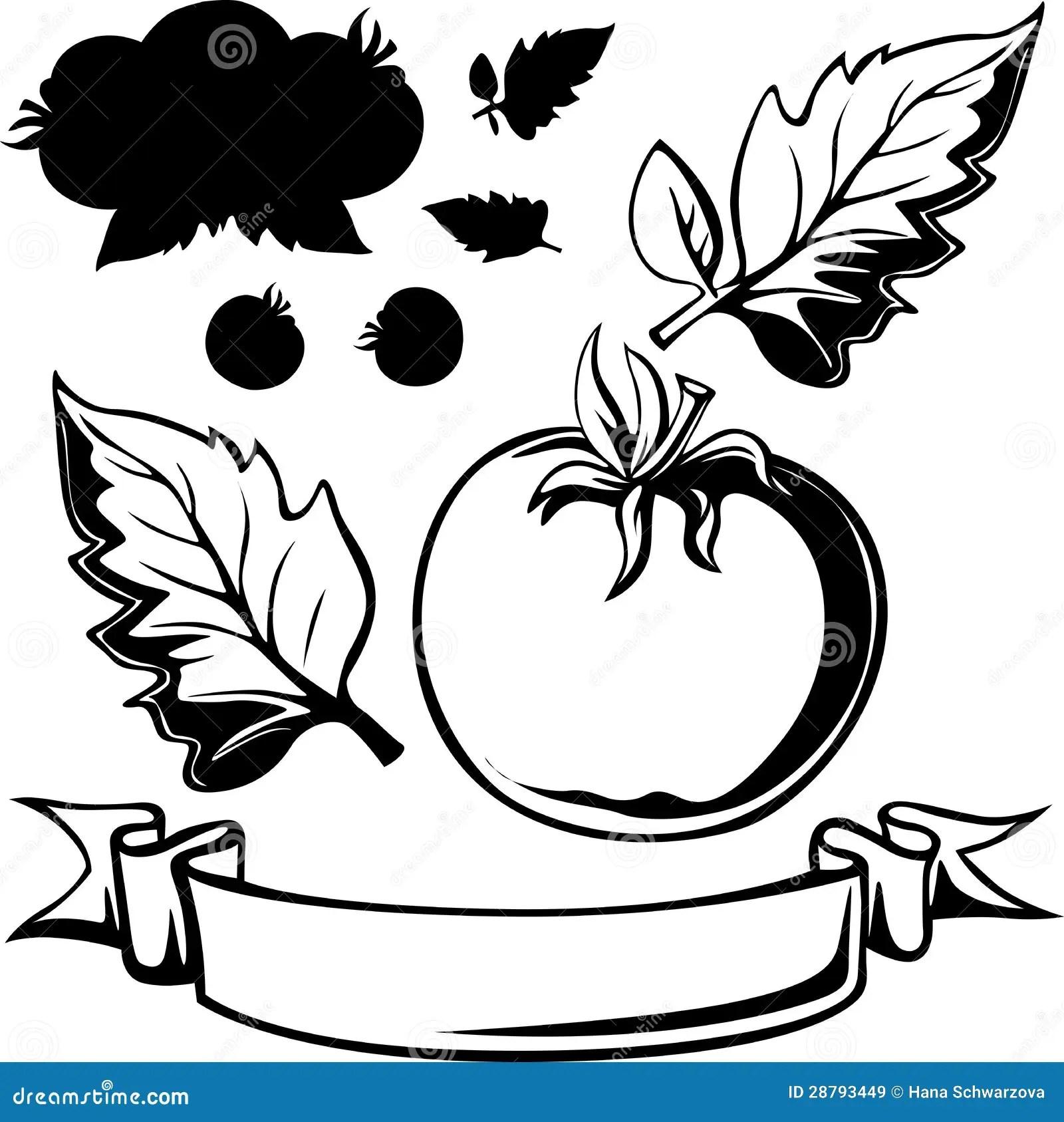 Tomato Black Line Illustration Royalty Free Stock Images