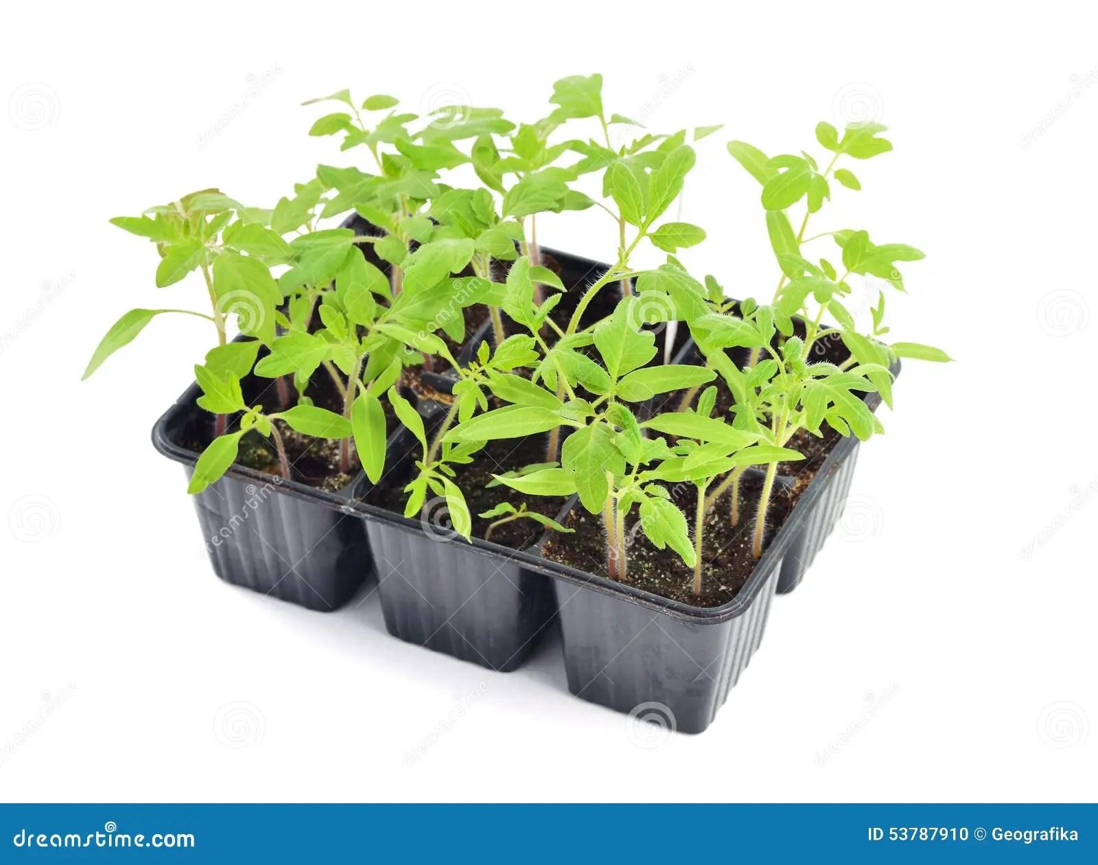 Soil Vegetable Garden Box