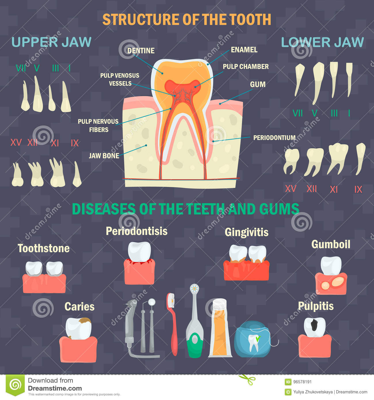 Tooth Structure Types Of Human Teeth Teeth Diseases And