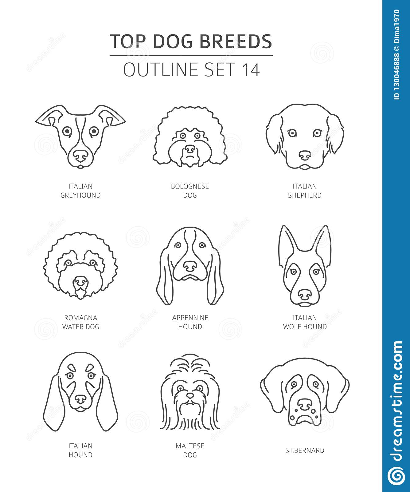 Top Dog Breeds Pet Outline Collection Stock Vector Illustration Of Origin Breed 130046888