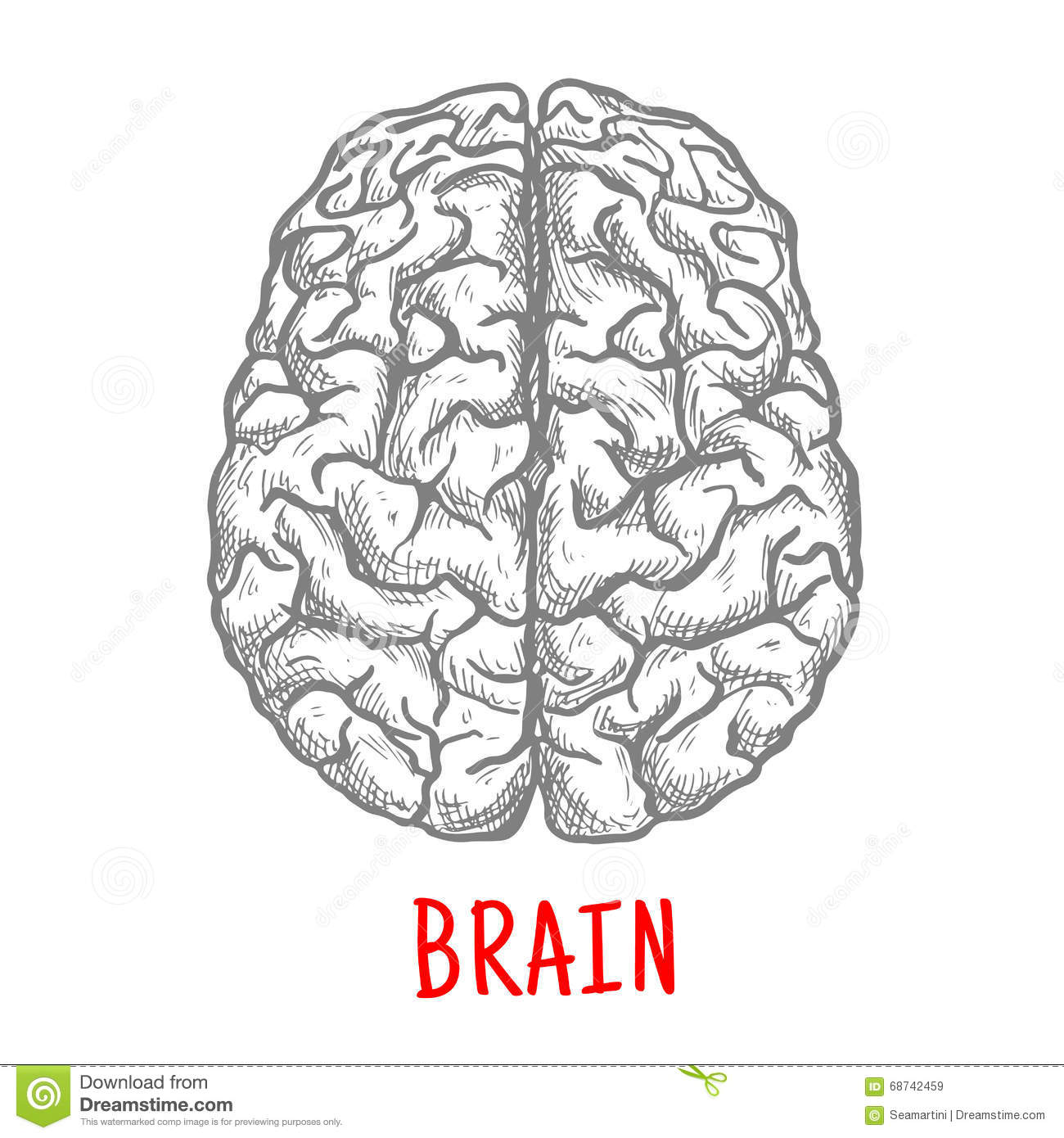 Top View Of Human Brain Sketch Style Stock Vector