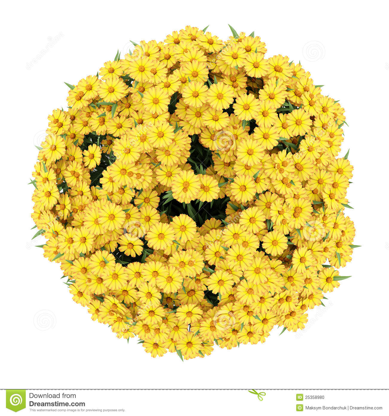 Yellow Flowering Bushes And Shrubs