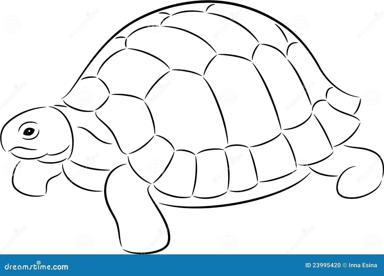 Tortuga Ilustracion Del Vector Ilustracion De Animal