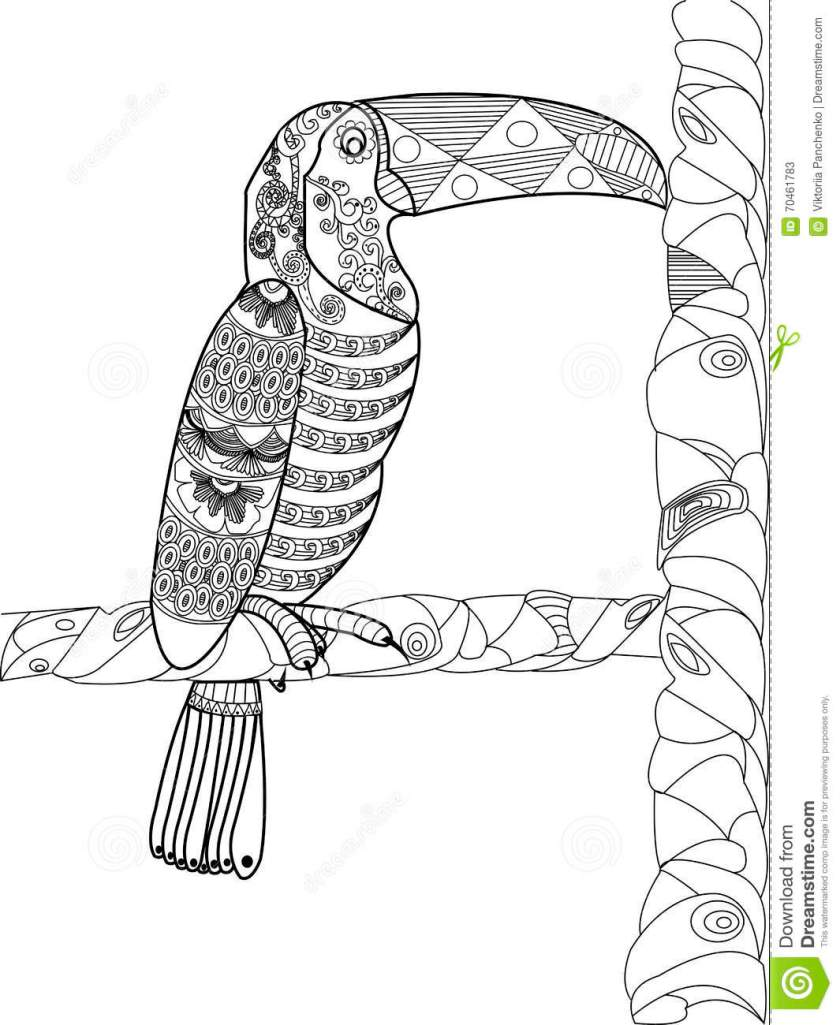 toucan coloring book vector for adults stock vector