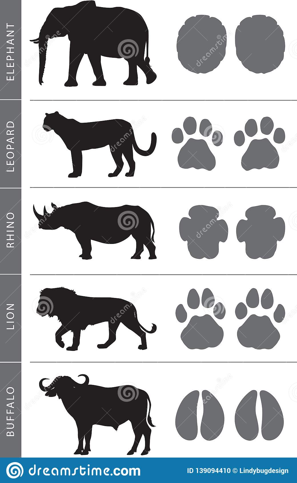 Africa S Big Five Footprints Stock Vector